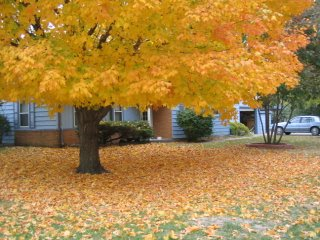 washington-fall2.jpg